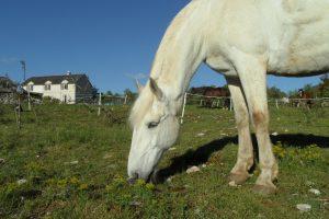 gite_randonnee_cheval